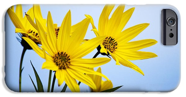 Floral Photographs iPhone Cases - Meadow Blooms iPhone Case by Christina Rollo
