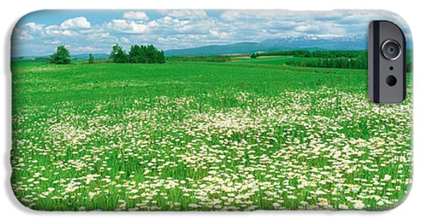 Meadow Photographs iPhone Cases - Meadow Flowers, Daisy Field iPhone Case by Panoramic Images