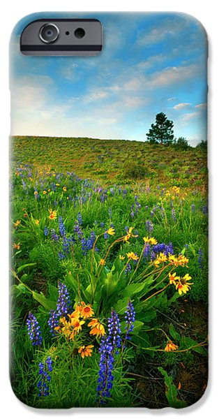 Meadow Photographs iPhone Cases - Meadow Gold iPhone Case by Mike  Dawson