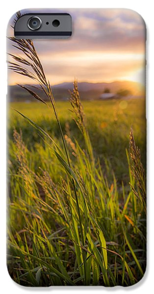 Grass iPhone Cases - Meadow Light iPhone Case by Chad Dutson