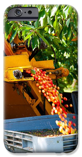 Combine iPhone Cases - Mechanical Harvester Shaking Cherry iPhone Case by Panoramic Images