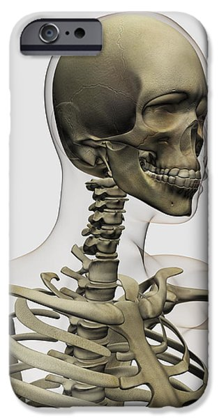 Medical Illustration Of A Womans Skull iPhone Case by Stocktrek Images