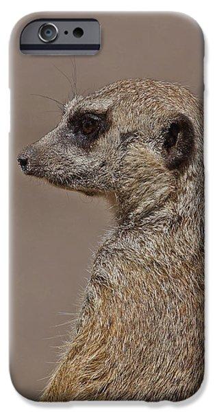Meerkat iPhone Cases - Meerkat 11 iPhone Case by Ernie Echols
