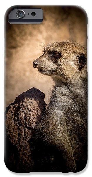 Meerkat iPhone Cases - Meerkat 12 iPhone Case by Ernie Echols