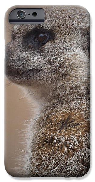 Meerkat iPhone Cases - Meerkat 9 iPhone Case by Ernie Echols