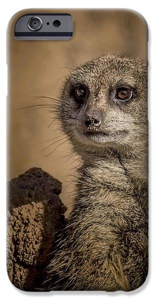 Meerkat iPhone Cases - Meerkat iPhone Case by Ernie Echols
