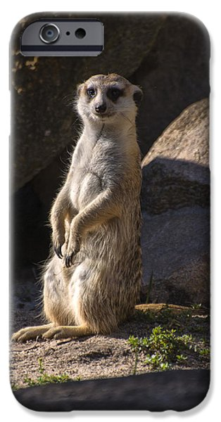 Meerkat Digital Art iPhone Cases - Meerkat looking forward iPhone Case by Chris Flees