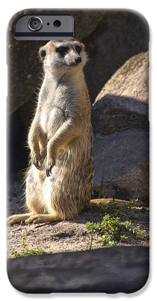 Meerkat Digital Art iPhone Cases - Meerkat looking left iPhone Case by Chris Flees