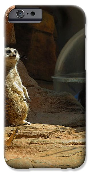 Meerkat Manners iPhone Case by Amy Cicconi