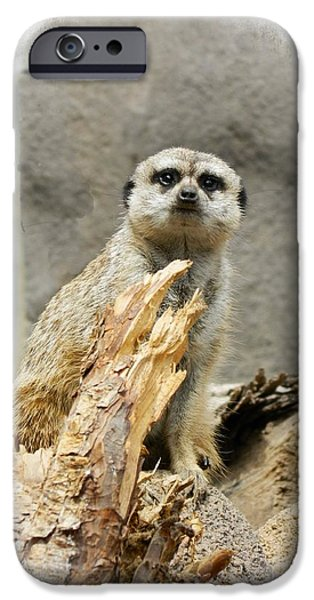 Meerkat Digital Art iPhone Cases - Meerkat iPhone Case by Michelle Frizzell-Thompson