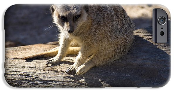 Meerkat Digital Art iPhone Cases - Meerkat Resting On A Rock iPhone Case by Chris Flees