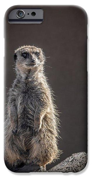 Meerkat iPhone Cases - Meerkat Sentinel iPhone Case by Ernie Echols