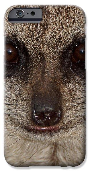 Meerkat iPhone Cases - Meerkat Stare Down iPhone Case by Ernie Echols
