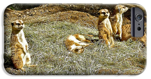 Meerkat Digital Art iPhone Cases - Meerkats in San Diego Zoo Safari Park in Escondido-California iPhone Case by Ruth Hager