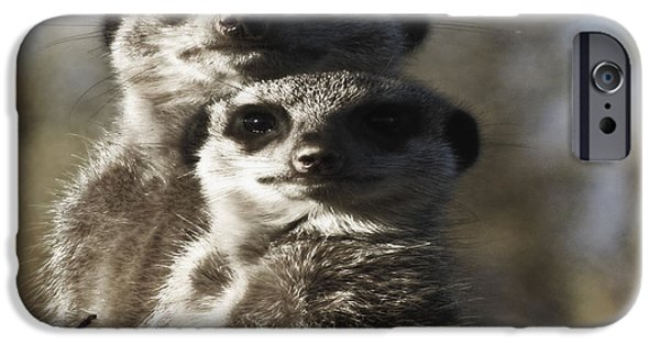 Meerkat Digital Art iPhone Cases - Meerkats iPhone Case by KJ DePace