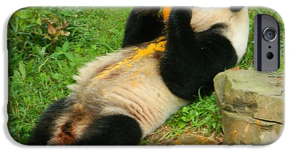 Smithsonian iPhone Cases - Mei Xiang Chowing On Frozen Treat iPhone Case by Emmy Marie Vickers