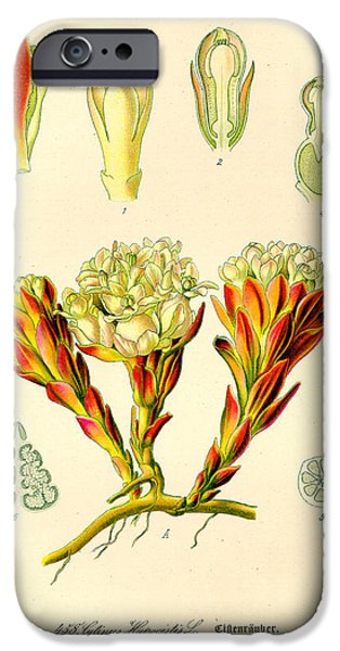 Melera iPhone Case by Nomad Art And  Design