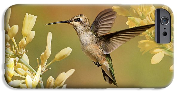 Animals Photographs iPhone Cases - Mellow Yellow iPhone Case by Donna Kennedy