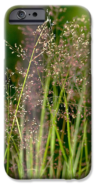 Florals iPhone Cases - Memories of Springtime iPhone Case by Holly Kempe