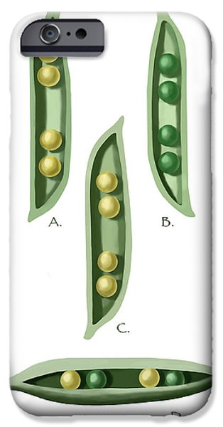 Genetic iPhone Cases - Mendels Peas iPhone Case by Spencer Sutton
