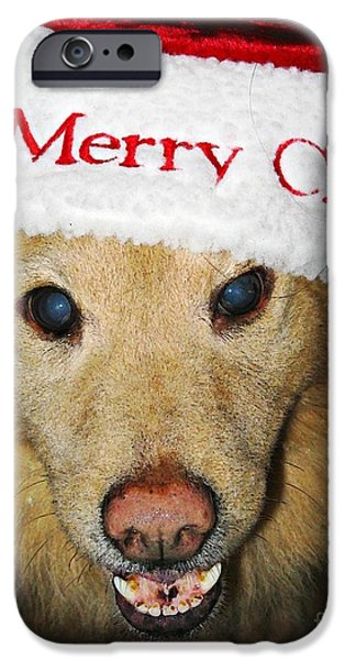 Black Dog iPhone Cases - Merry Christmas iPhone Case by Sarah Loft