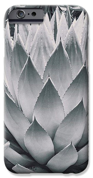 Mescal Agave iPhone Case by Kelley King