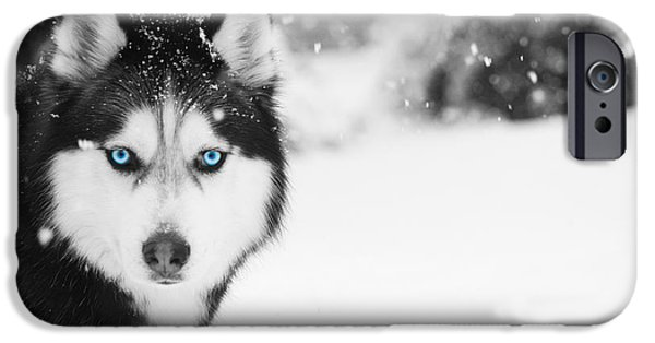 Huskies iPhone Cases - Mesmerizing iPhone Case by Nunweiler Photography