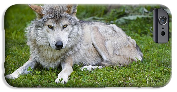 Wild Animals Photographs iPhone Cases - Mexican Gray Wolf iPhone Case by Sebastian Musial