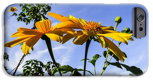Flowers Photographs iPhone Cases - Mexican sunflower iPhone Case by Zina Stromberg