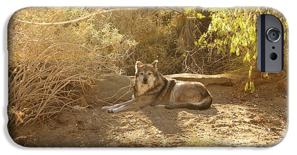 Dog Close-up Digital Art iPhone Cases - Mexican Wolf  iPhone Case by Barbara Snyder