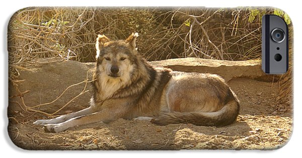 Dog Close-up Digital Art iPhone Cases - Mexican Wolf Close Up iPhone Case by Barbara Snyder