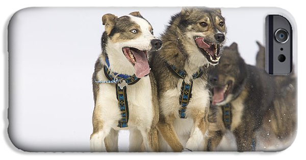 Husky iPhone Cases - Michael Suprenants Lead Dogs Crest The iPhone Case by Jeff Schultz