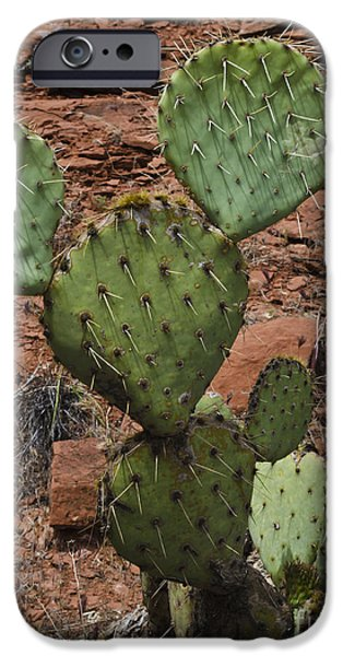 Sedona iPhone Cases - Mickey the Cactus iPhone Case by David Gordon