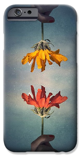Tara Turner iPhone Cases - Middle Ground iPhone Case by Tara Turner