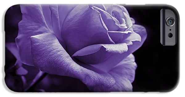 Monotone iPhone Cases - Midnight Rose Flower in Lavender iPhone Case by Jennie Marie Schell