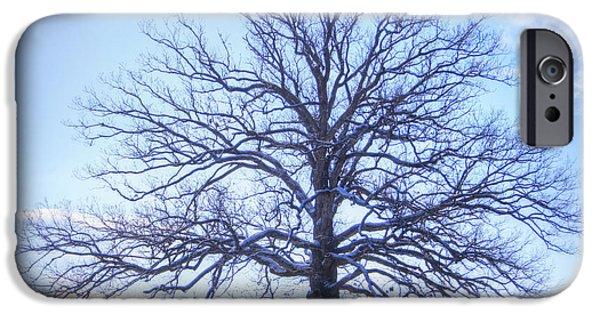 Mighty Oak iPhone Cases - Mighty Oak in Winter iPhone Case by Cricket Hackmann