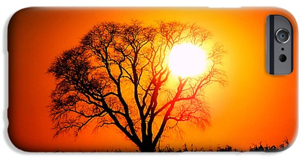 Mighty Oak iPhone Cases - Mighty Oak Sunset iPhone Case by Sharon Woerner