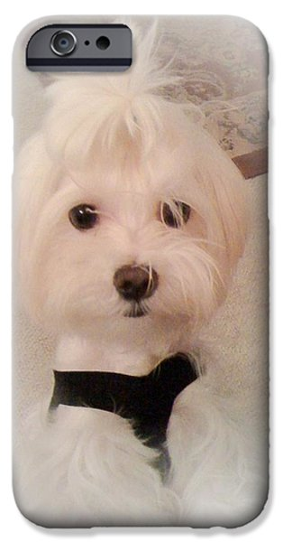 Maltese Puppy iPhone Cases - Mikey iPhone Case by Susan Wilson