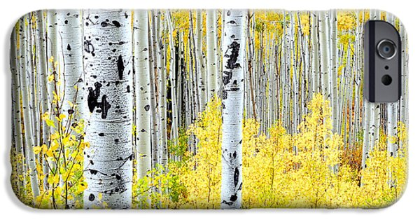Turning Leaves iPhone Cases - Miles of Gold iPhone Case by The Forests Edge Photography - Diane Sandoval