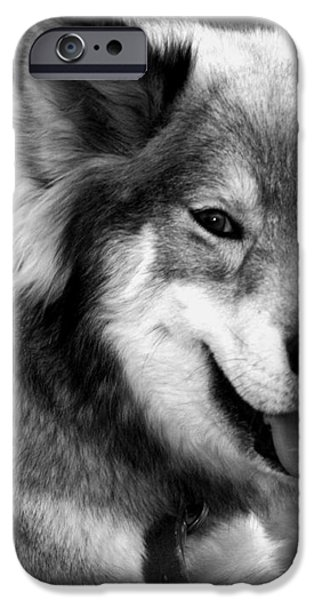 Miley The Husky With Blue and Brown Eyes - Black and White iPhone Case by Michael Braham