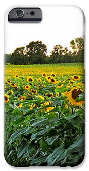 Millions Of Sunflowers iPhone Case by Danielle  Parent