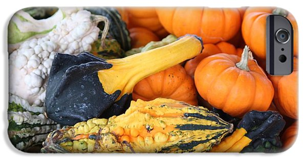 Crops iPhone Cases - Mini Pumpkins And Gourds iPhone Case by Cynthia Guinn