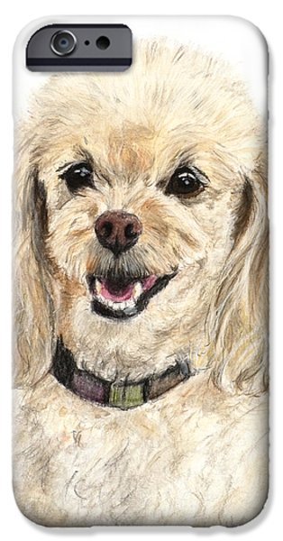 Small Pastels iPhone Cases - Miniature Poodle Painting Champagne iPhone Case by Kate Sumners