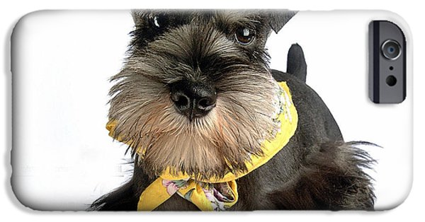 Dogs iPhone Cases - Miniature Schnauzer Puppy  iPhone Case by Marvin Blaine