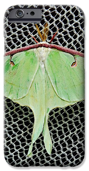 Mint Green Luna Moth iPhone Case by Andee Design