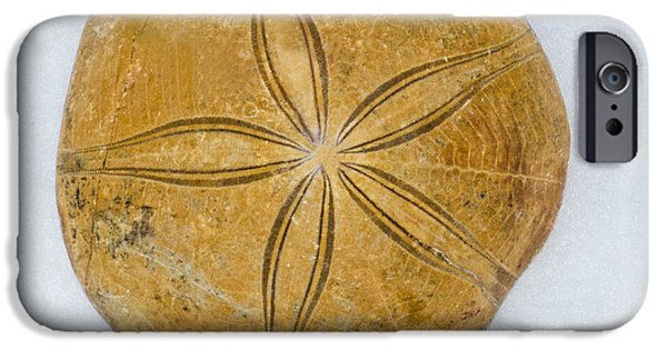 Recently Sold -  - Fauna iPhone Cases - Miocene Sand Dollar Fossil iPhone Case by Millard H Sharp