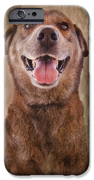 Huskies iPhone Cases - Misha iPhone Case by Barbara Manis