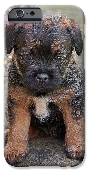 Cute Puppy iPhone Cases - Miss You - Border Terrier Puppy iPhone Case by Gill Billington