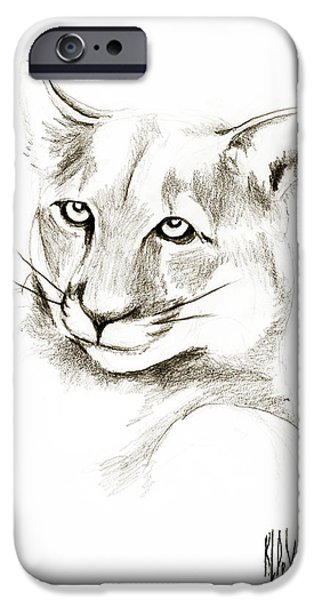 Fauna Drawings iPhone Cases - Missouri Mountain Lion II iPhone Case by Kip DeVore