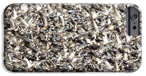 Mounds iPhone Cases - Missouri Snow Geese Chaos iPhone Case by Steven Bateson